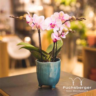 Orchidee lila/rosa